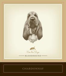 bloodhound front