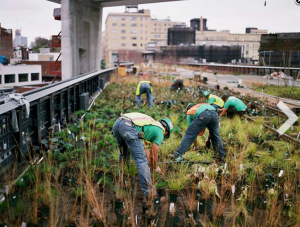 Planting the High Line