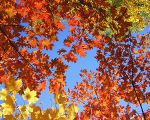 20081018-leaves