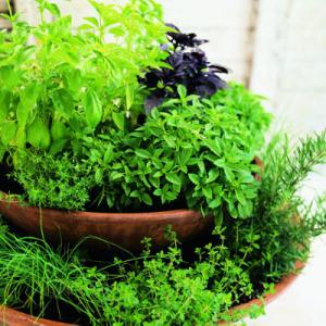 Dinner is ready with a simple two-tiered herb garden tumbling with chives, rosemary, thyme