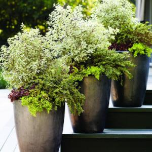 Make a big entrance with a row of big contemporary pots filled with sedums, cottoneasters, and junipers.