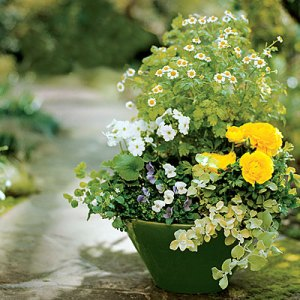 Bring Spring to your steps with layers of small greens tinged with white and yellow flowers.