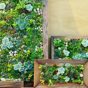 Take it to the wall with a vertical textural garden of colorful succulents.