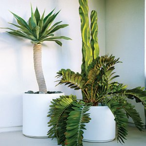 Keep it light and white with ceramic planters and bold sculptural plants like agaves, ferns, and other simple specimens.