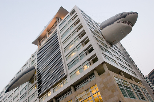 Shark Week at Discovery Channel | Photo from DCMetrocentric