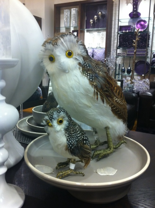 Feathered Owl, $6 - $19 | Z Gallerie