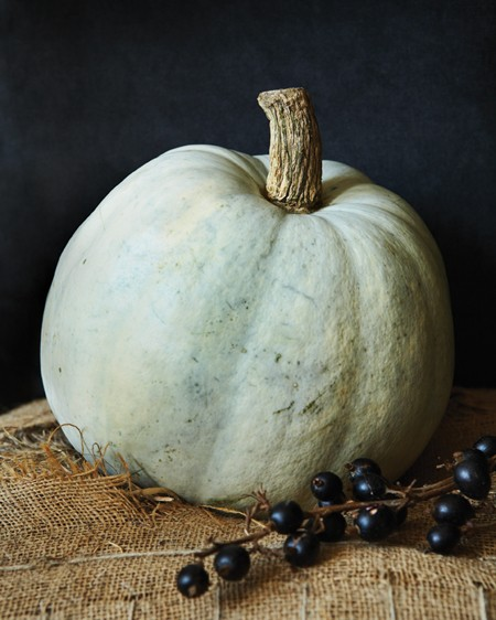 Create a work of art by displaying an heirloom pumpkin variety, folded burlap or black velvet and a spray of fall berries (consider varieties Valenciano, Lumina, or Jarrahdale). Common goes elegant!