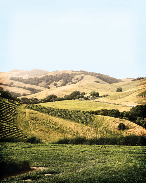 golden hills and vines of napa valley