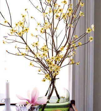 indoor blooms forced gardening