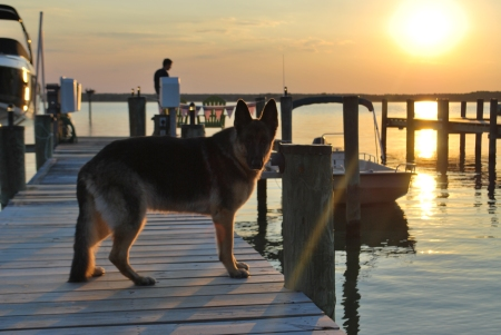 Alpha framed by a setting sun on our dock in Oxford, Maryland.