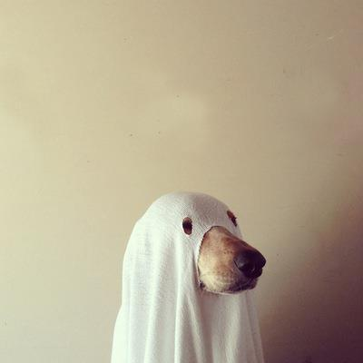 dog ghost halloween photo