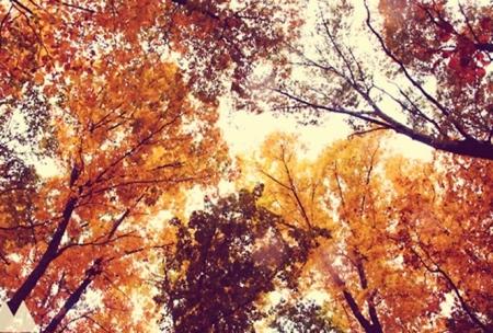 autumn splendor trees color leaves fall